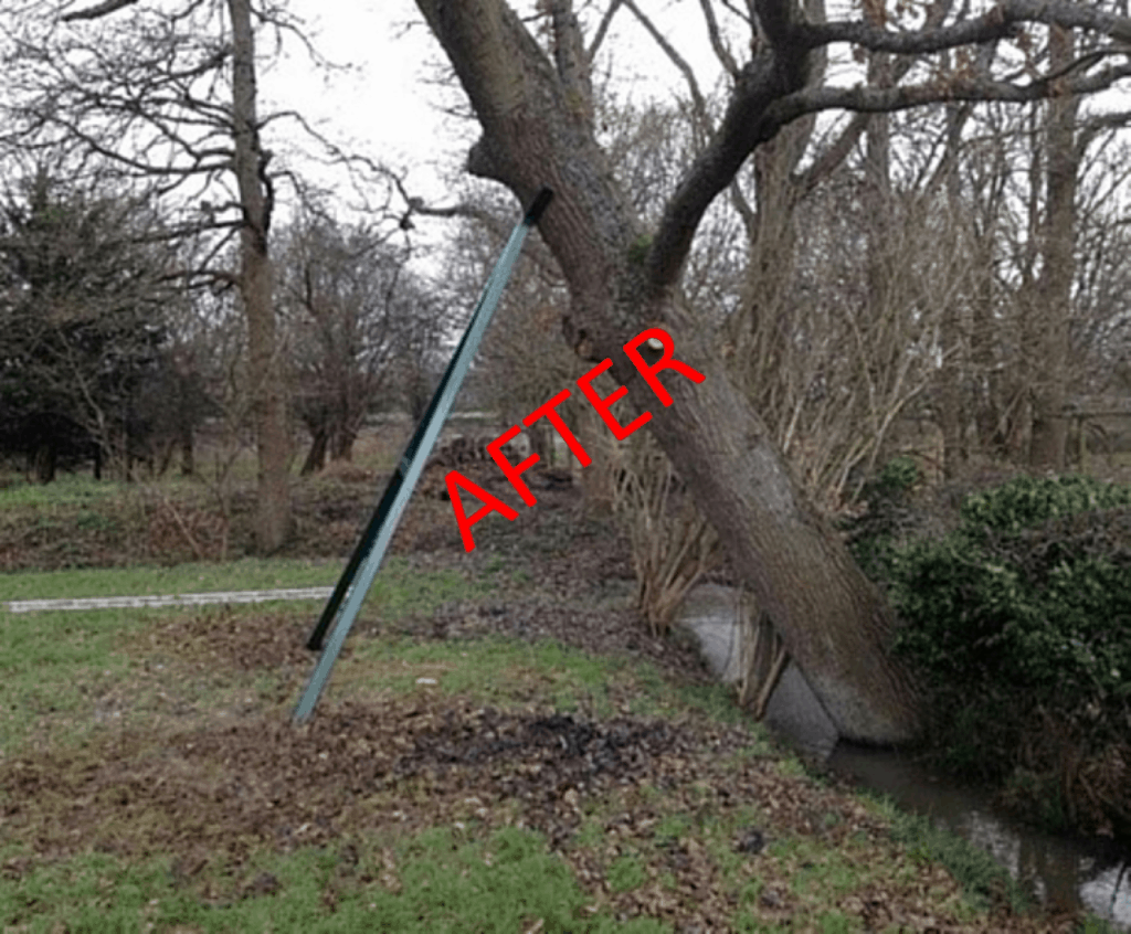 Leaning Tree After