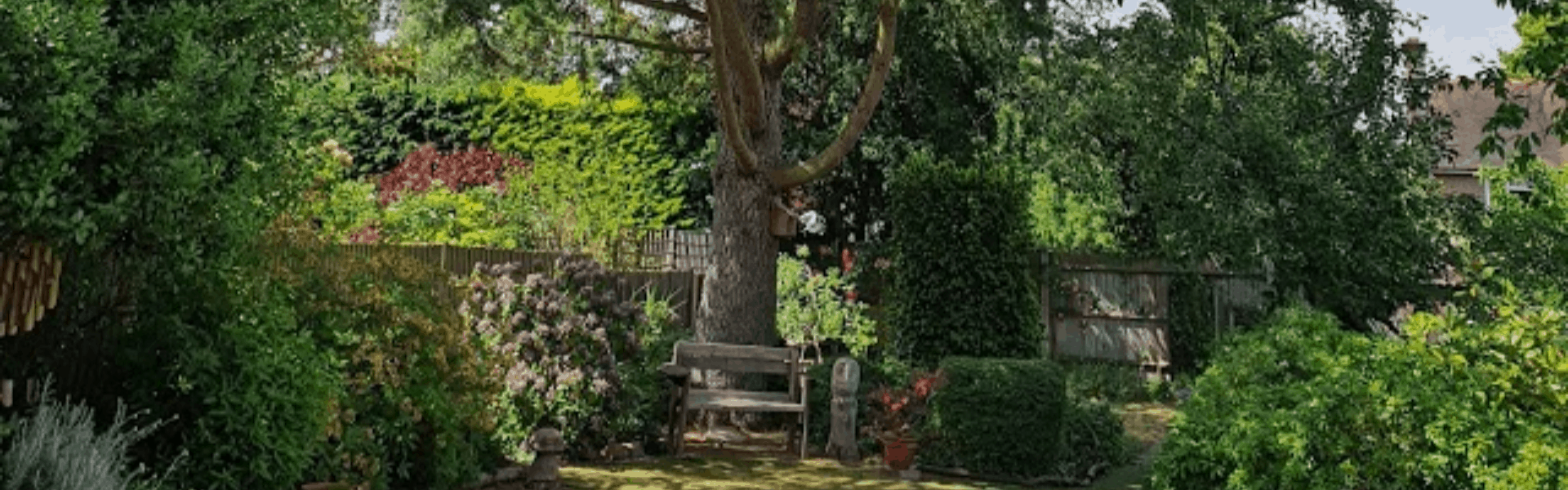 Magnificent Cedar Tree