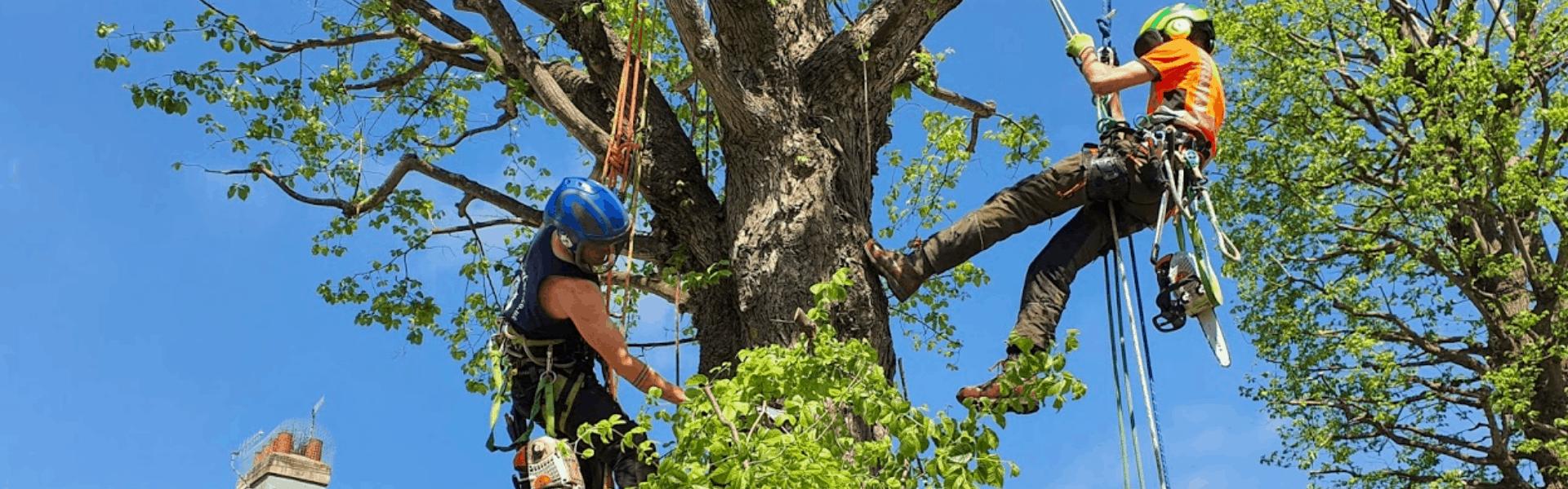 Climbing Arborist Sussex