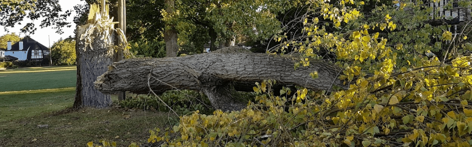 Tree danger to the public: know your responsibilities