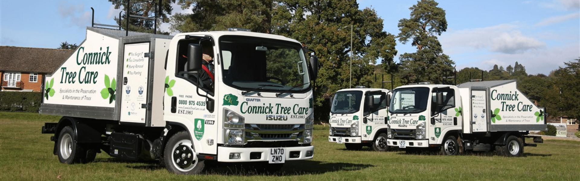 Tree Surgeon in Surrey