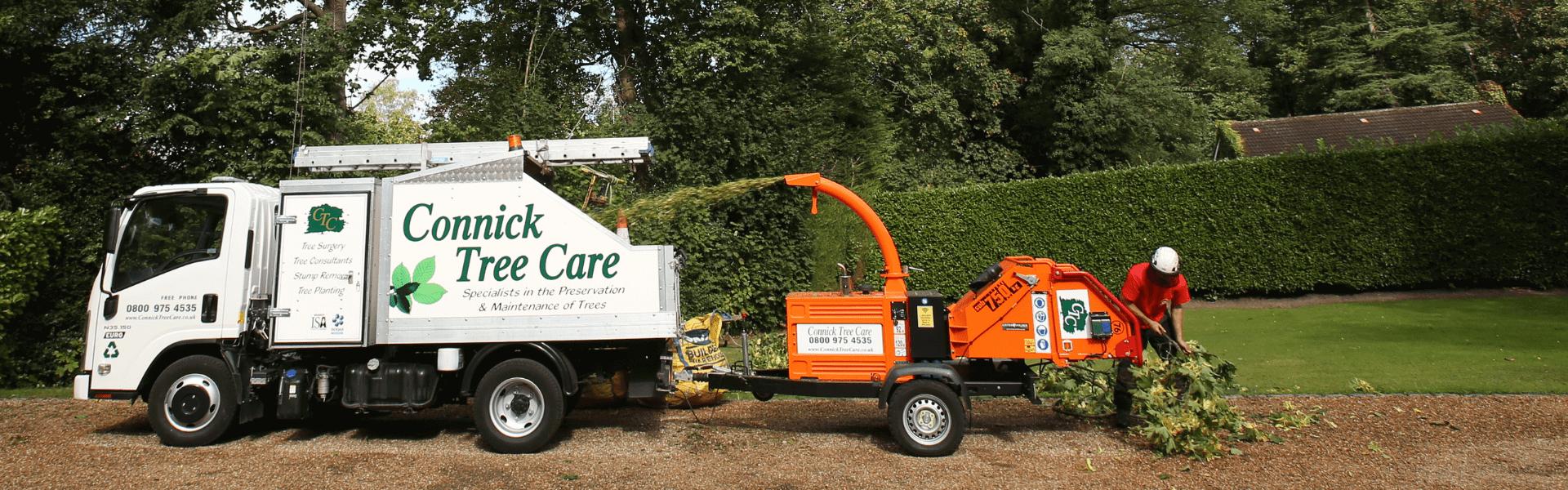 Tree surgeon in Sussex