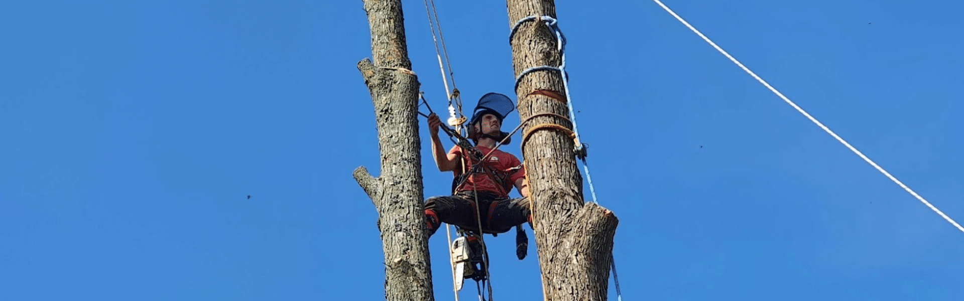 Tree Felling and Tree removal